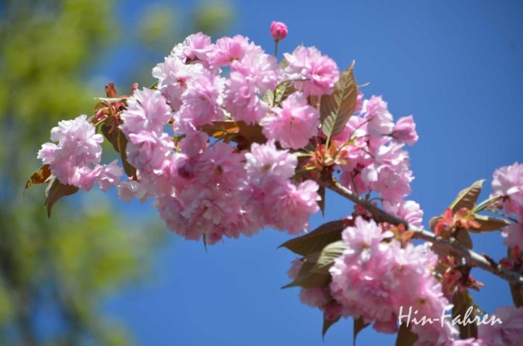 Spaziergang im Garten in Giverny #Garten #Blüte #Baum #Giverny