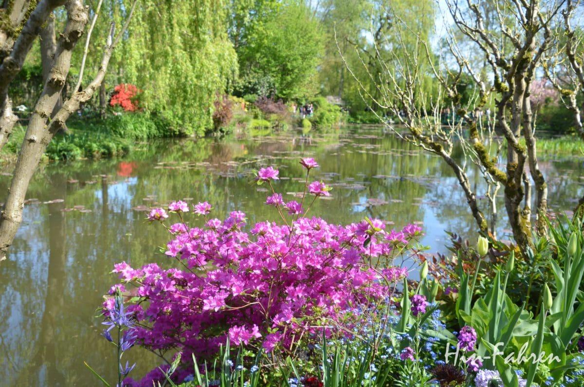 Spiegelungen im Seerosenteich in Giverny #Monet #Seerosenteich