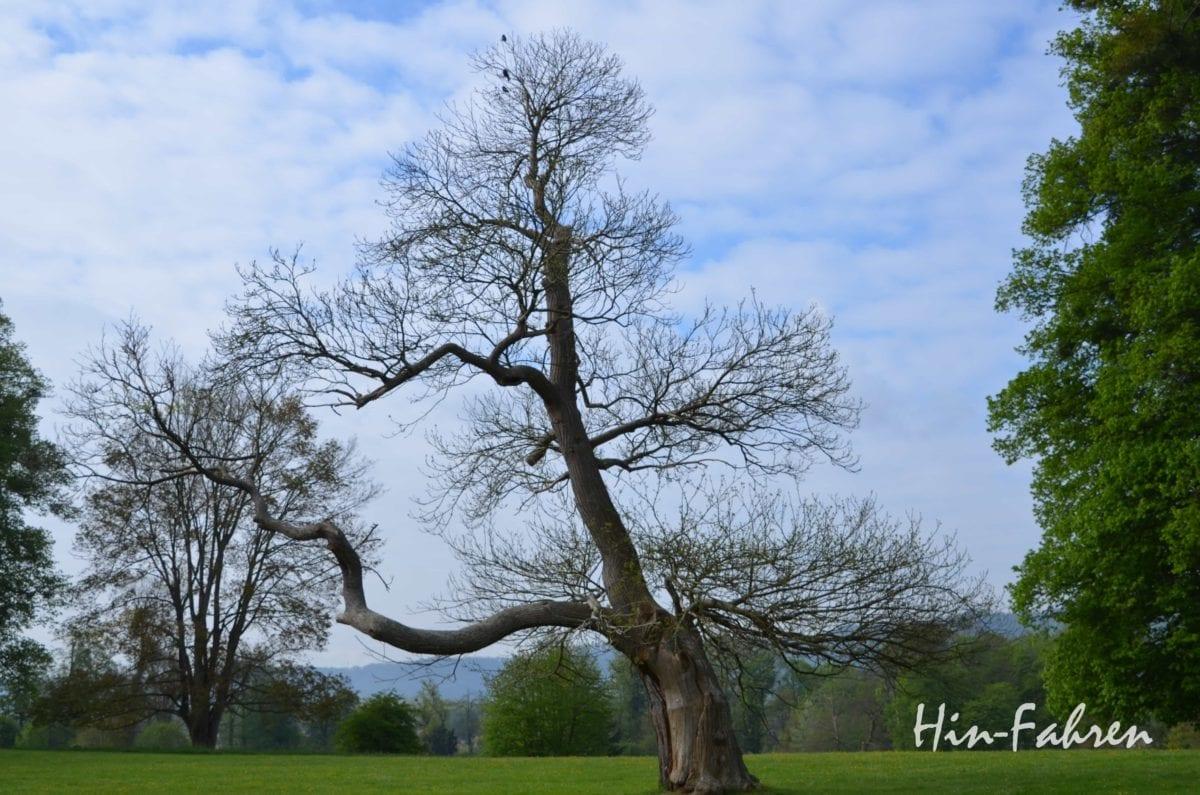 Highlight Rundreise Normandie Wohnmobil: Baum im Park in Jumieges