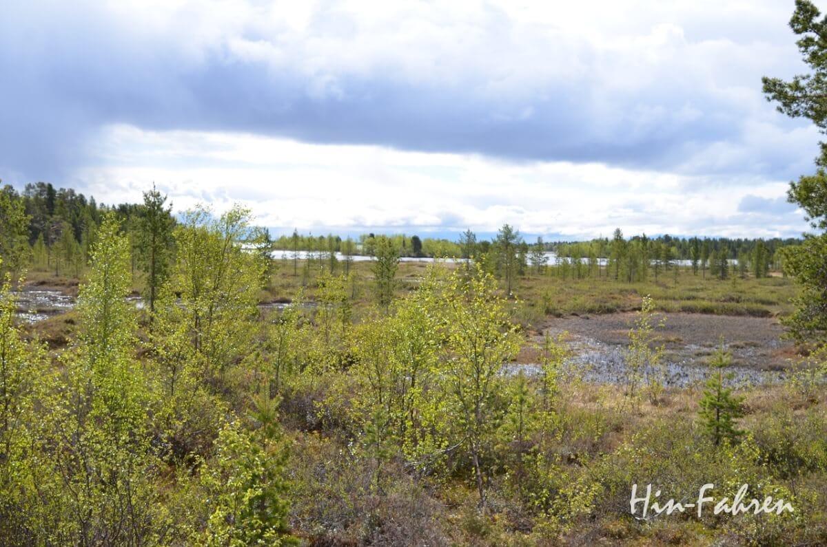 Bäume, Moor und See in Finnland