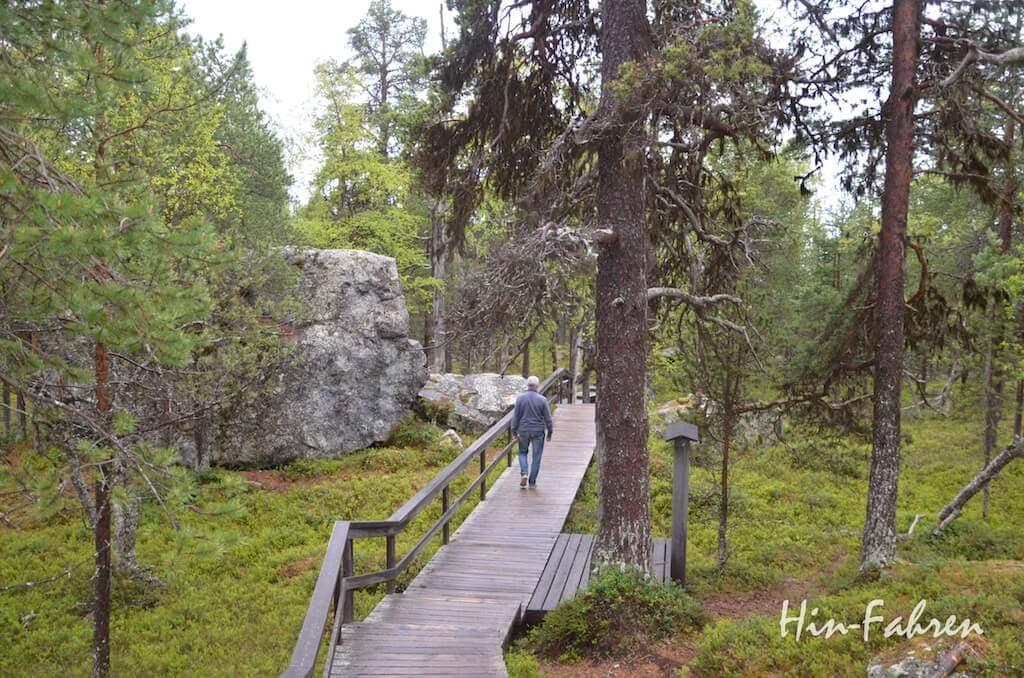 Besichtigung unterwegs - alter Kiefernwald an der Bärenhöhle in Finnland