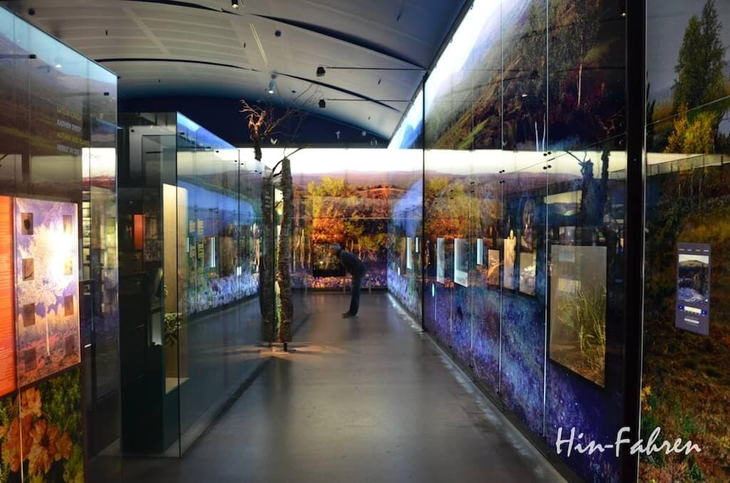 Ausstellung zur Natur im Museum Siida