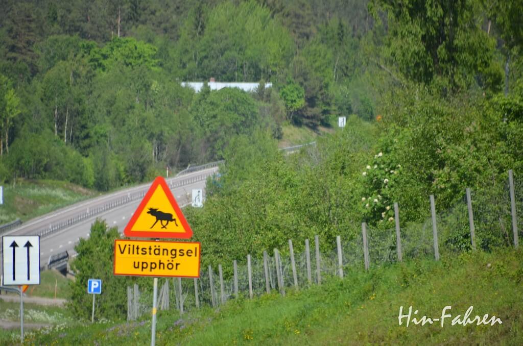 Gefahrenschild mit Elch in Nordschweden