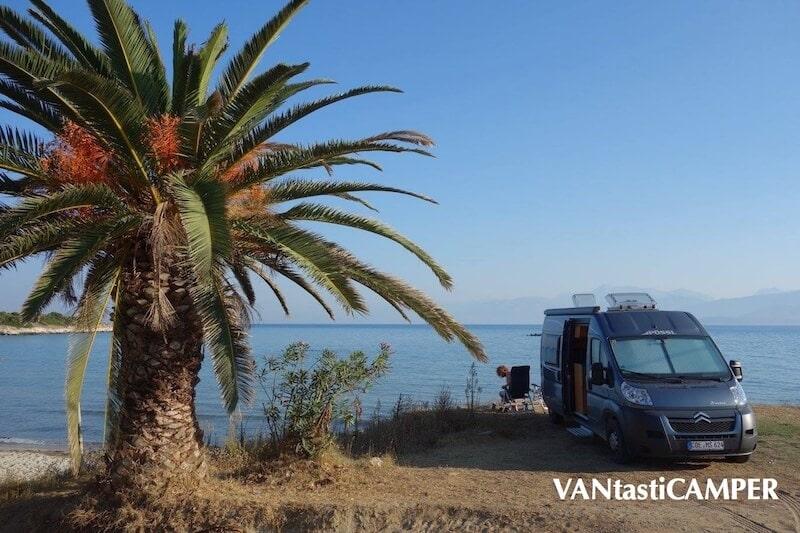 Kastenwagen steht neben einer Palme am Meer