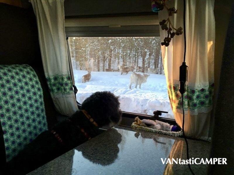 Hund schaut aus dem Wohnmobilfenster des Pössl
