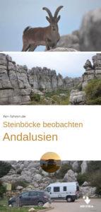 Reisetipp von Hin-Fahren: Beobachtung von Steinböcken und Wandern im Naturschutzgebiet El Torcal