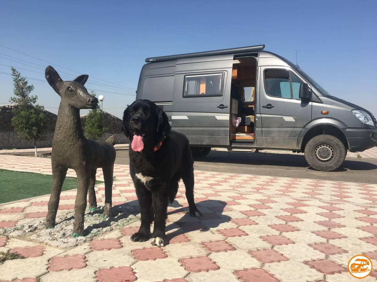 Mercedes-Kastenwagen und großer Hund