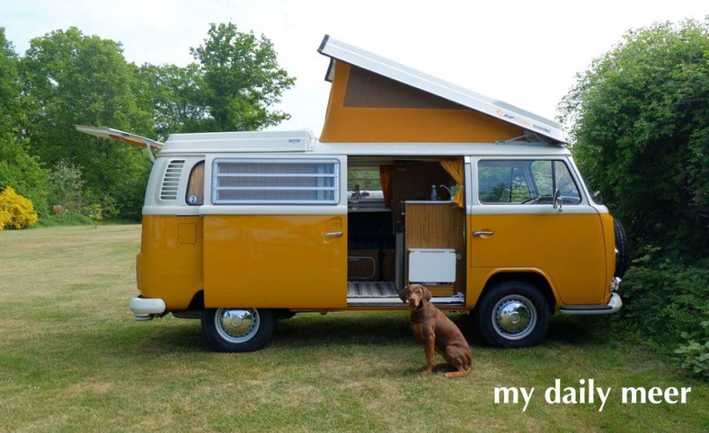 Hund auf dem Campingplatz vor dem gelben VW-Bus mit Klappdach