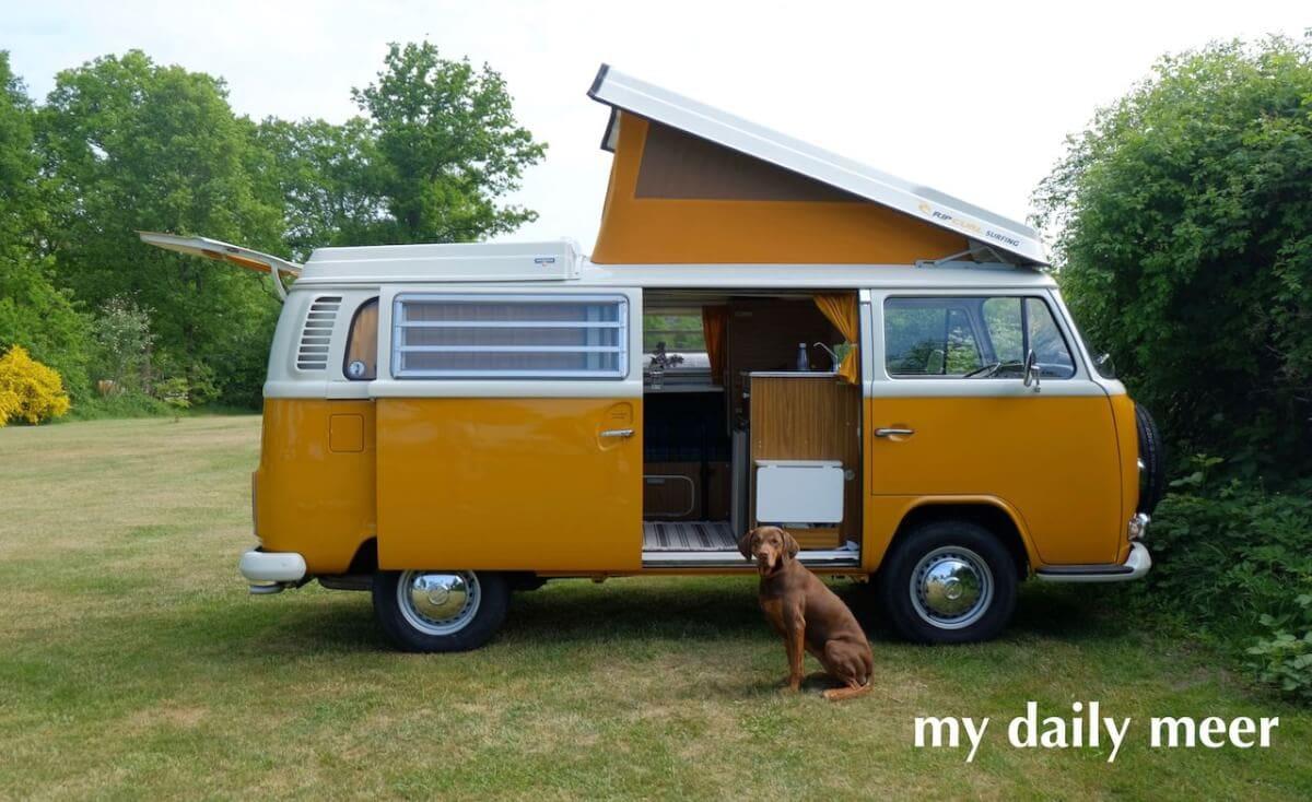 Hund auf dem Campingplatz vor dem VW-Bus