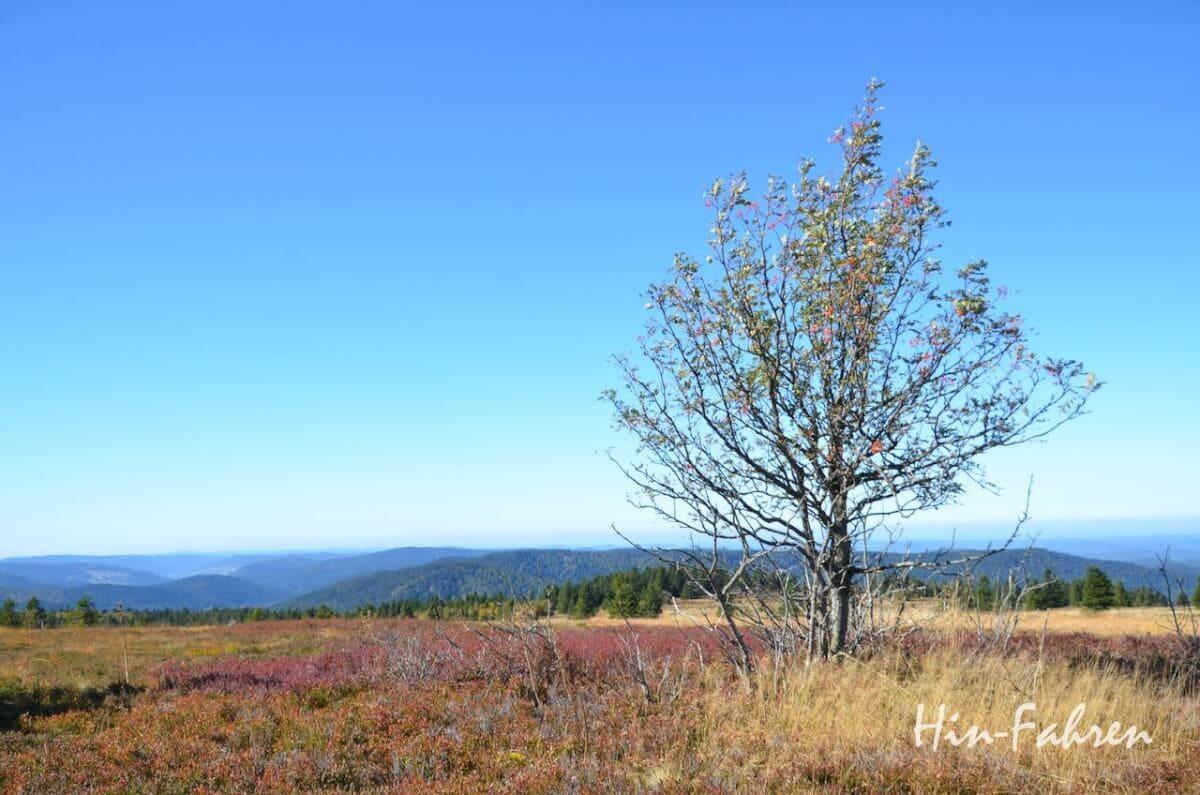 Heide, Baum und Berge in Herbstfarben