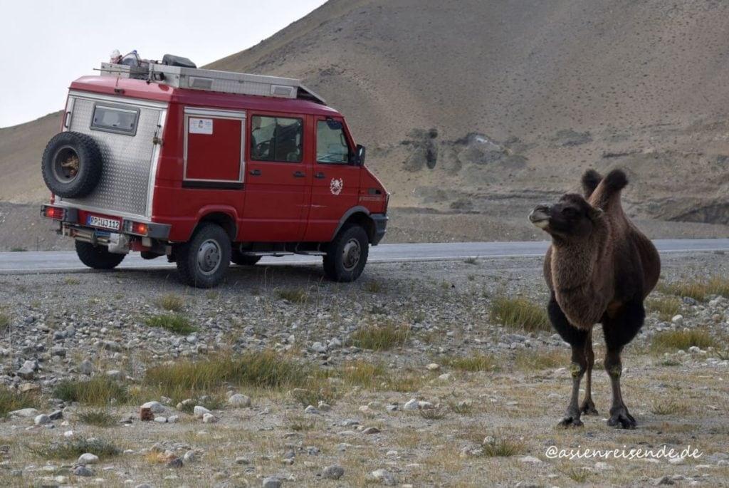 Mit dem Wohnmobil durch Asien: Feuerwehrbus trifft Trampeltier