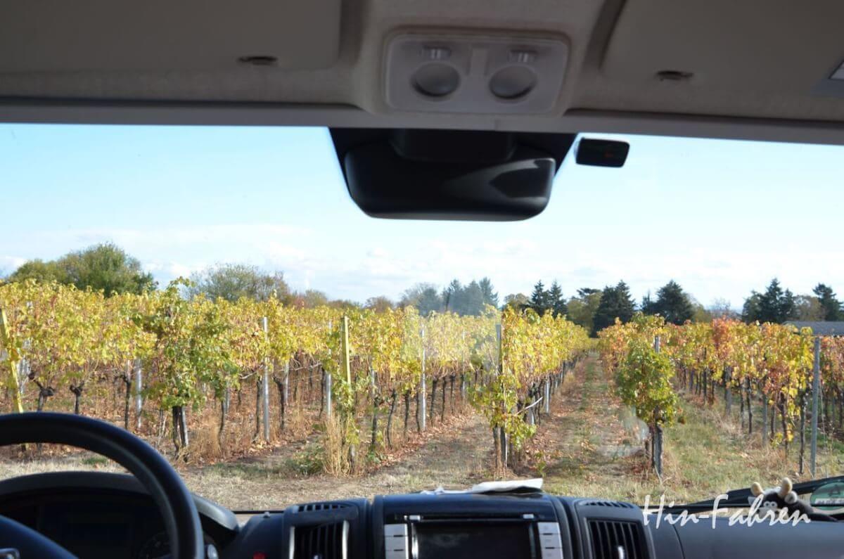 Blick aus dem Wohnmobilfenster auf Weinreben
