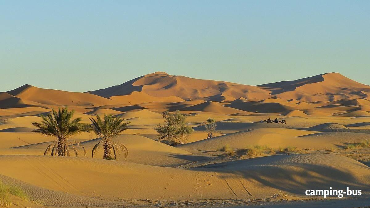 Ein exotisches Ziel mit dem Wohnmobil: Kamele, Palmen und Sanddünen in Marokko