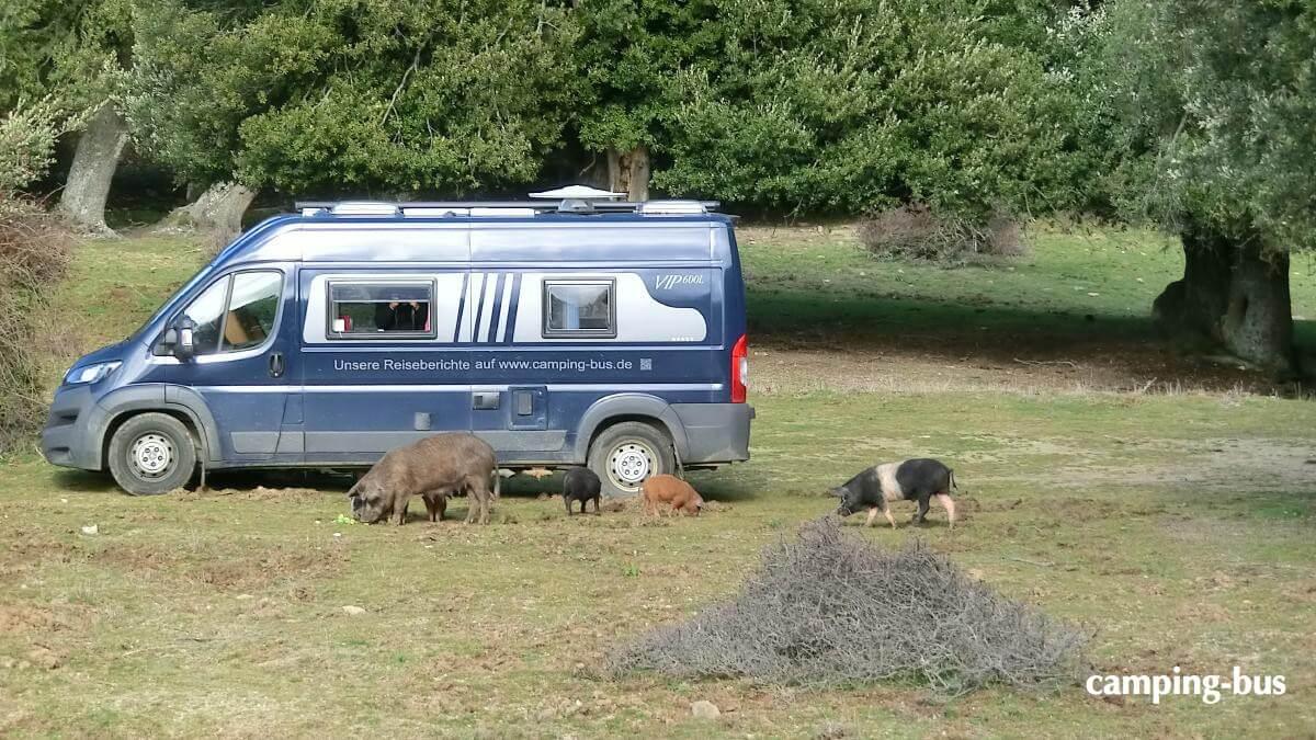 Burow-Kastenwagen parkt auf einer Wiese
