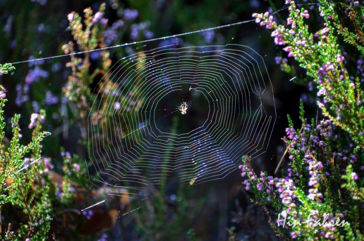 Lieblingsbild Pfalz: Licht auf einem Spinnennetz