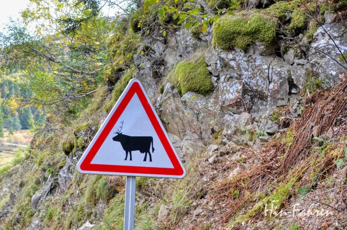 Lieblingsbilder Elsass: Strassenschild Warnung Kühe mit Rentierhörnern