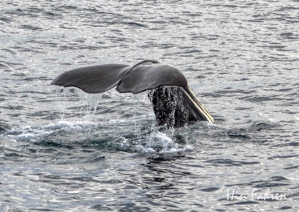 Highlight vier Wochen Norwegen mit Wohnmobil: Walbeobachtung in Andesnes
