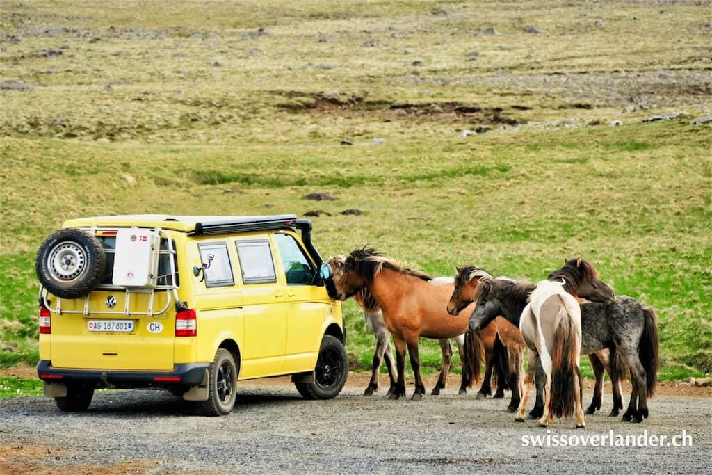 VW Bus und Islandpferde