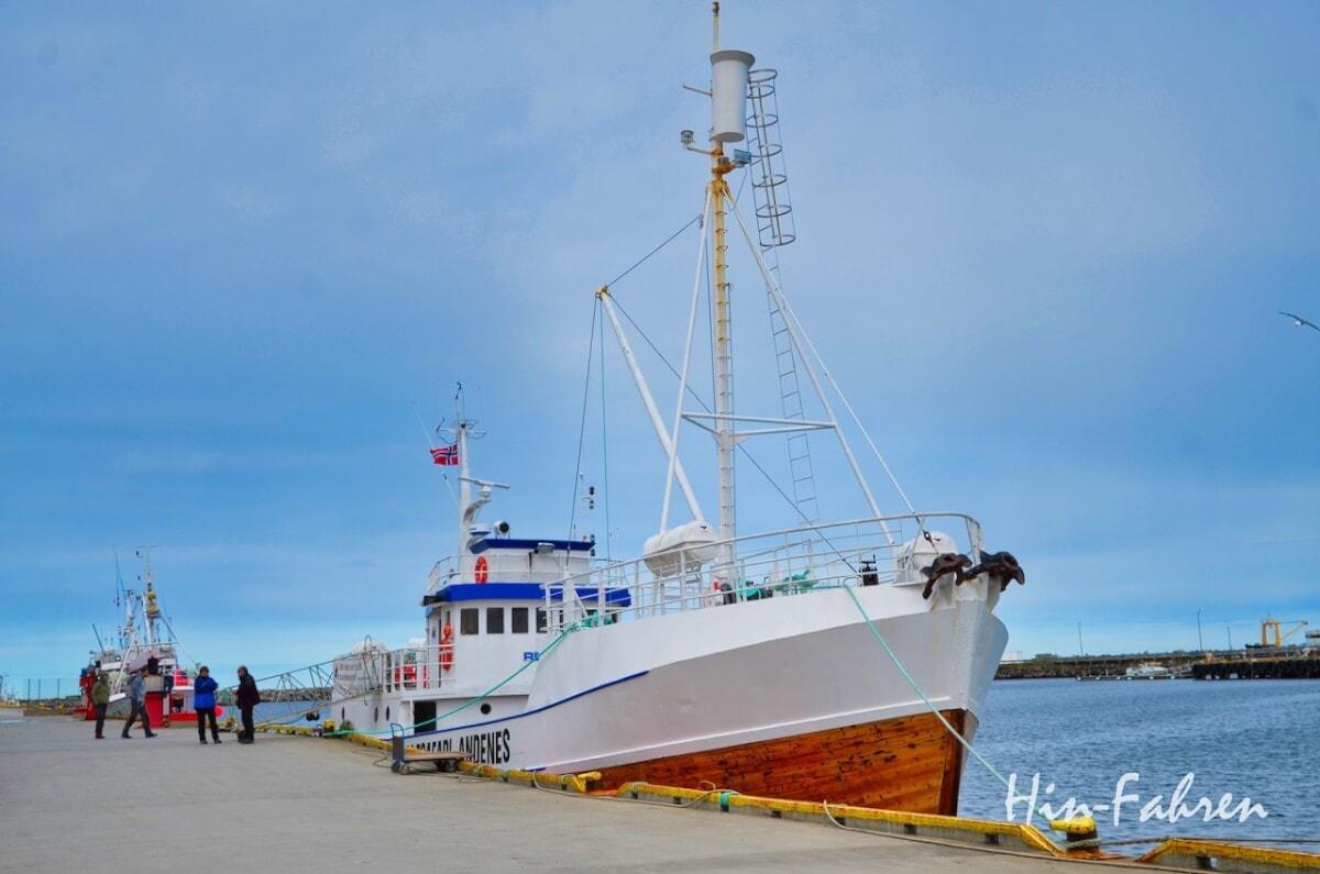 Höhepunkt unserer Nordkap-Tour mit dem Wohnmobil: Wale in Norwegen