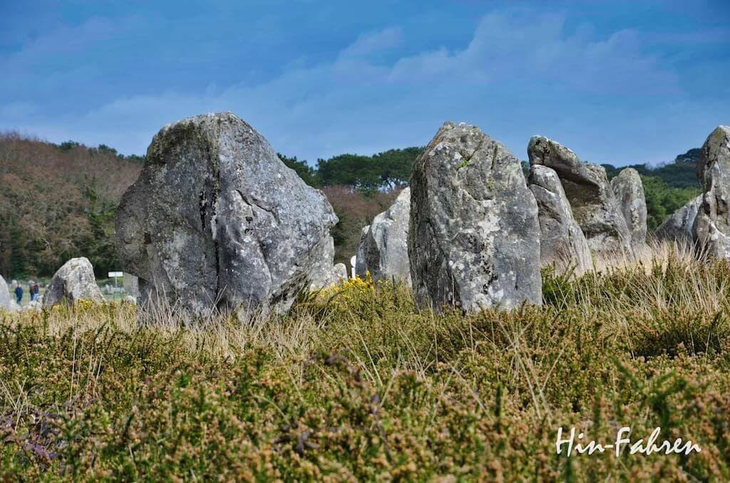 Stehende Steine in einem Feld mit Ginster in der Bretagne