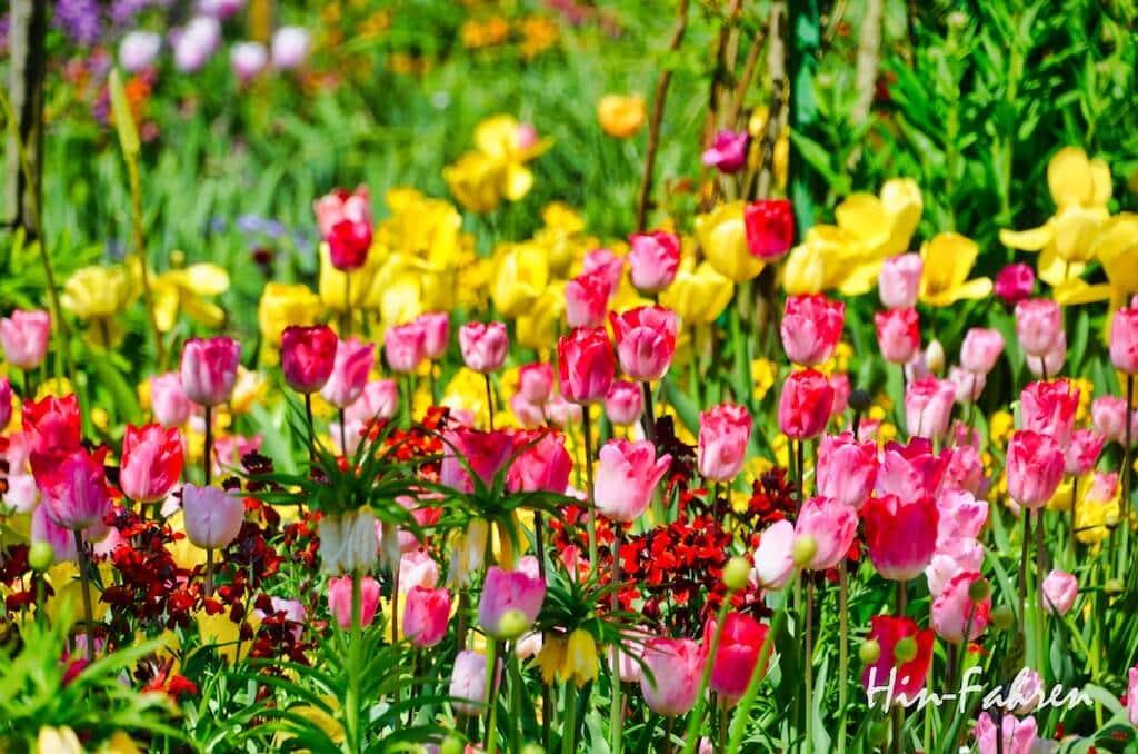 Schönes Ziel an Ostern mit Wohnmobil in der Normandie: Blühende Tulpen in Giverny