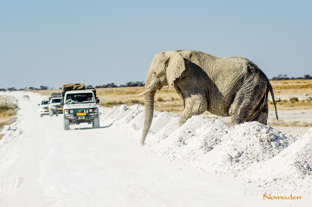 Elefant will die Straße überqueren
