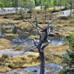 Norwegen mit Wohnmobil: Lofoten zum mächtigen Gezeitenstrom Saltstraumen bei Bodø
