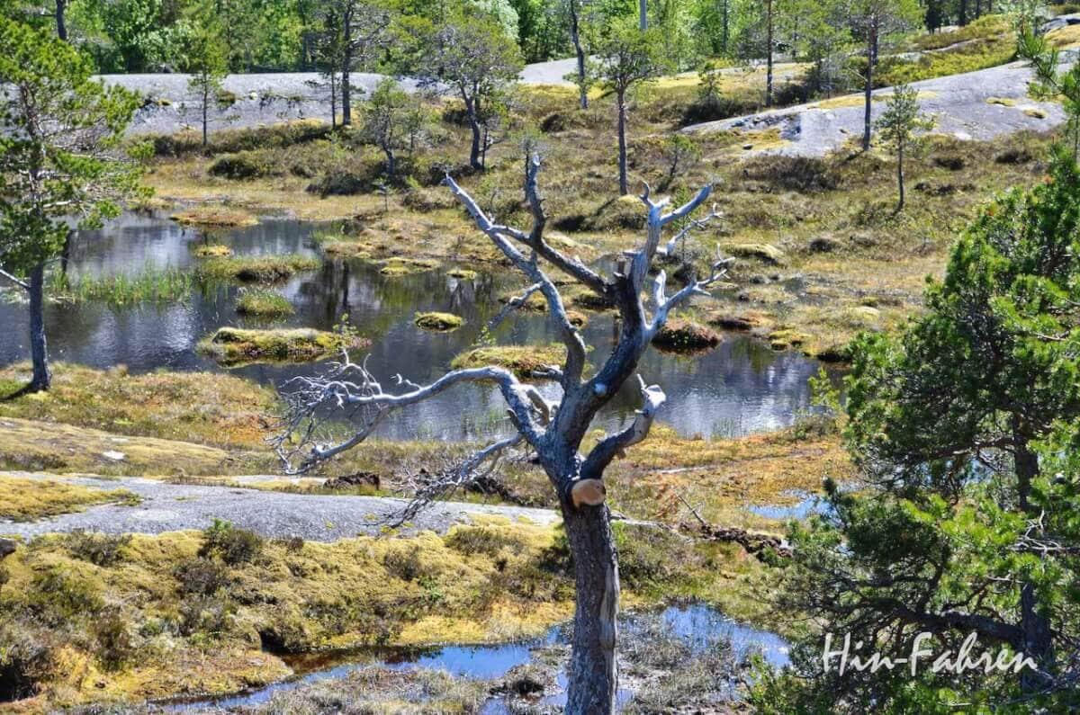 Abgestorbener Baum in Gletscherlandschaft in Norwegen