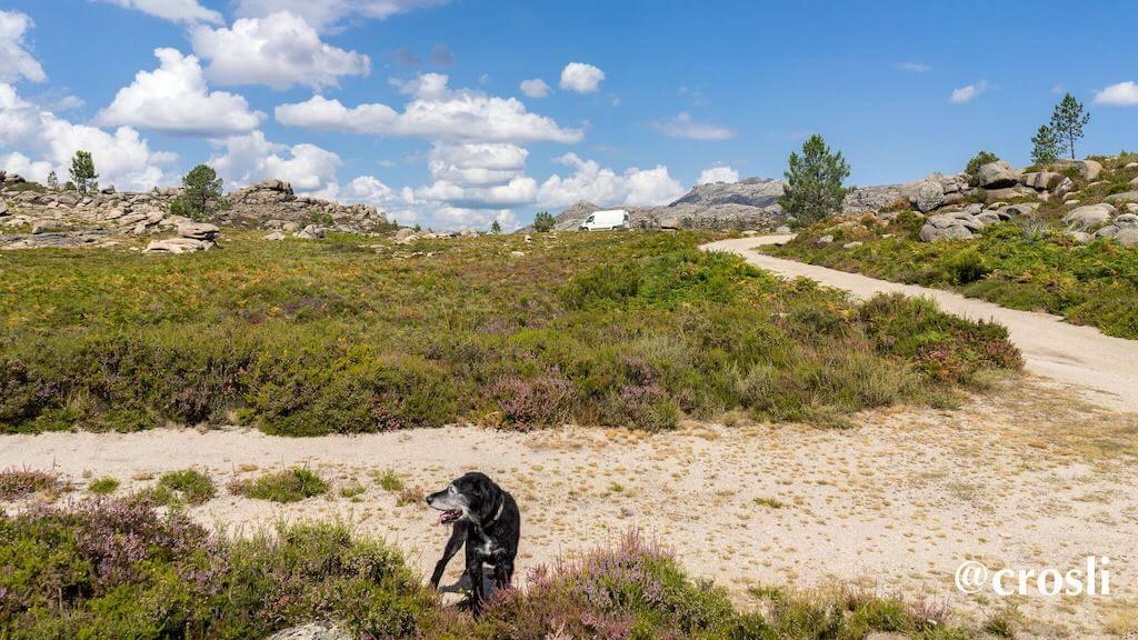 Hund und Wohnmobile in Portugal in der Natur