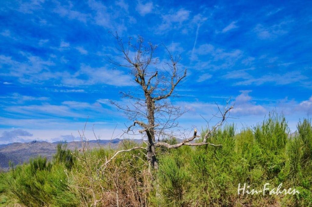 Baum und Heide im Naturpark