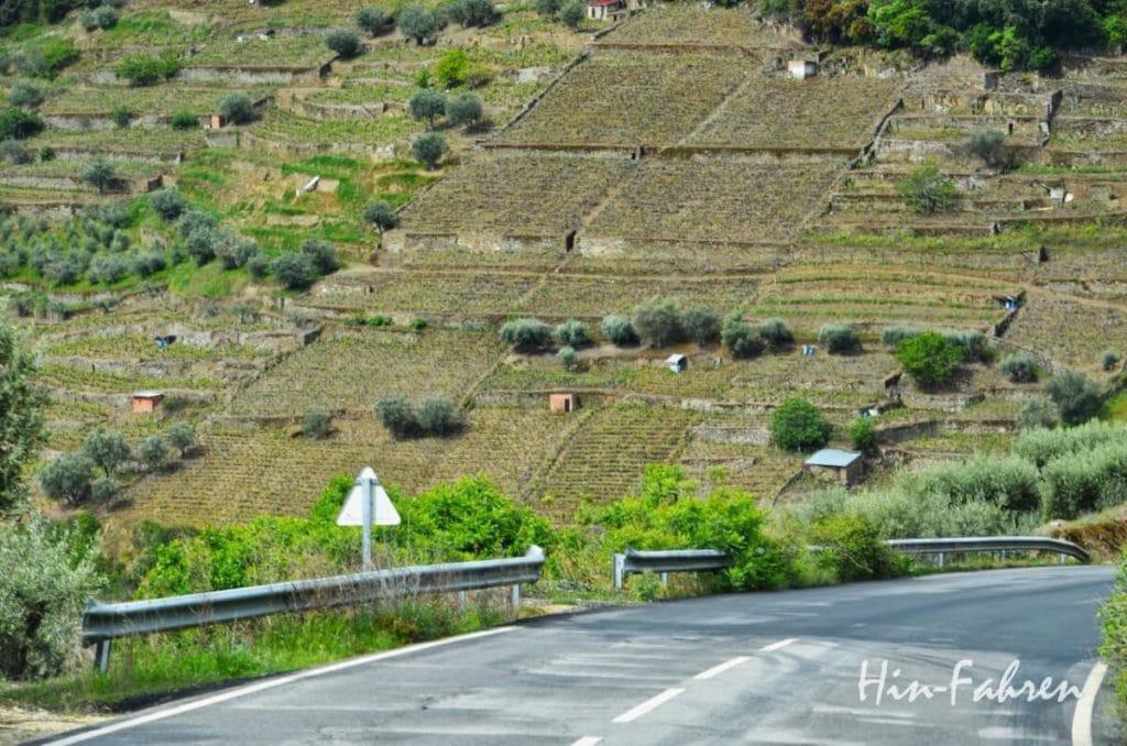 Fahrt mit dem Wohnmobil durch die Weinberge zum Douro