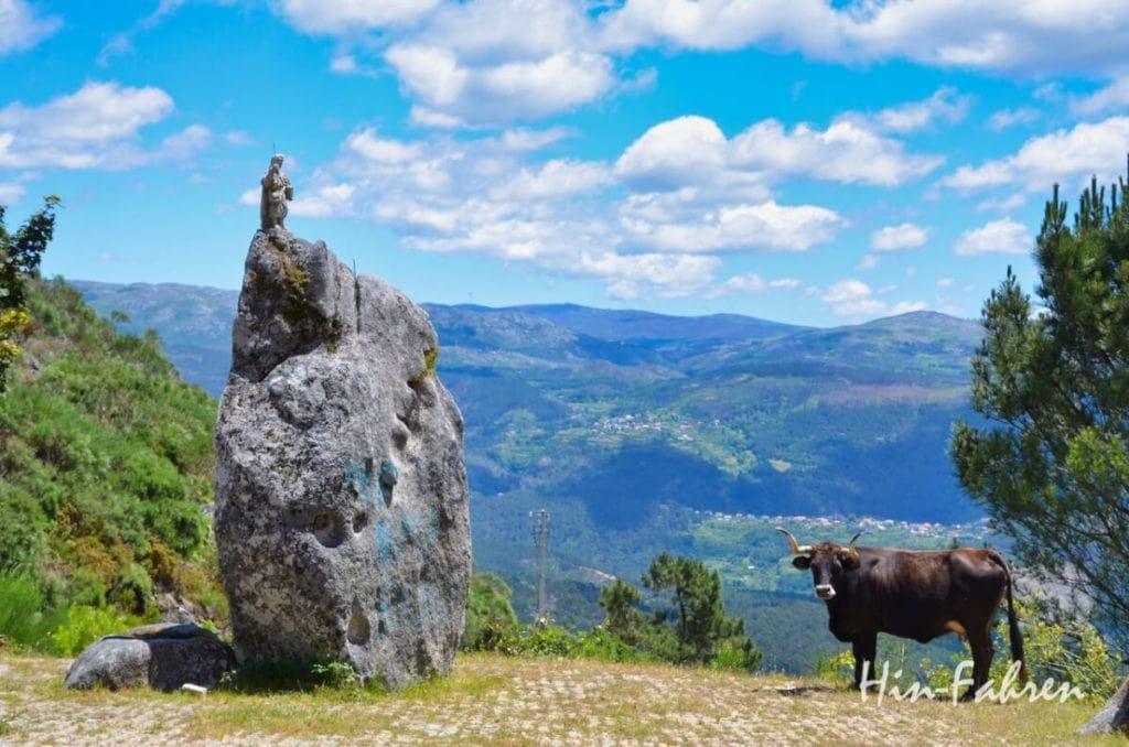 Rind mit großen Hörnern und Heiligenfigur in  Nord-Portugal