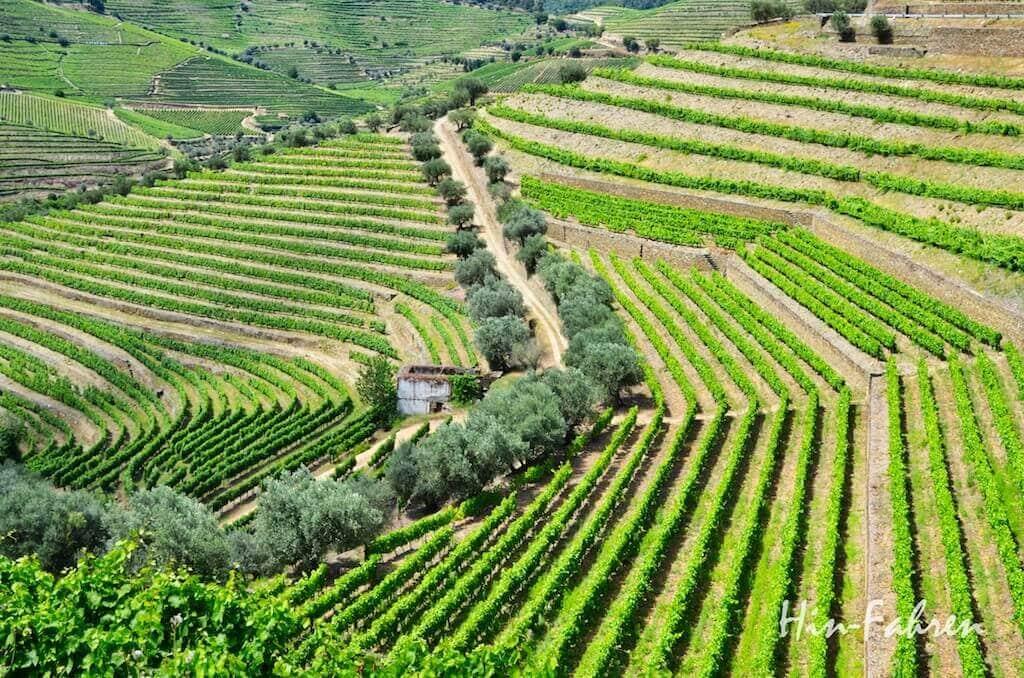 Portugal: Weinberge im Douro-Tal