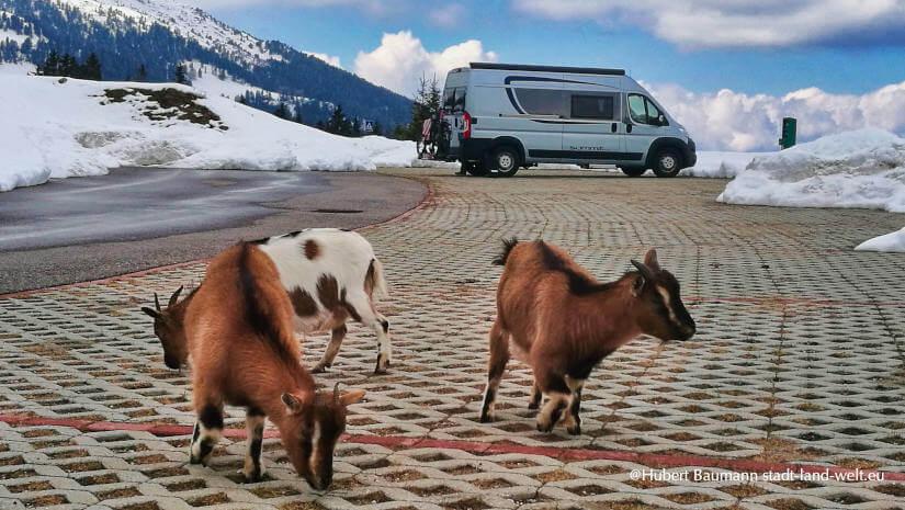 Pössl Kastenwagen mit Ziegen in den Bergen im Schnee