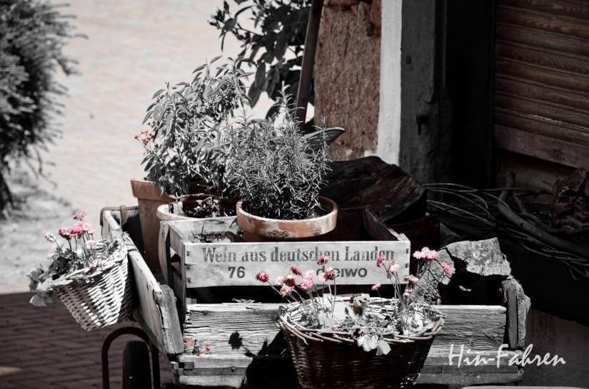 Weinkisten mit Pflanzen in der Pfalz