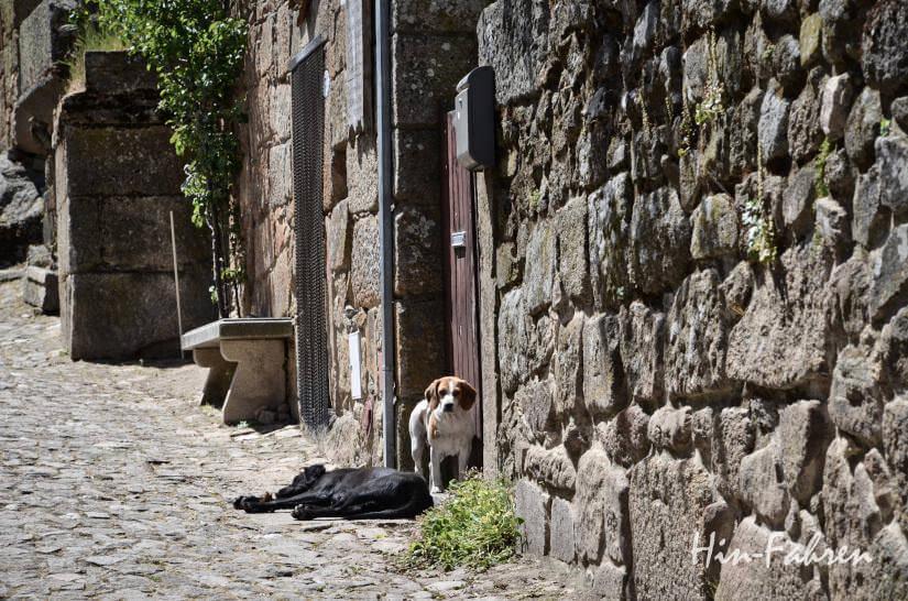 Hunde in Portugal