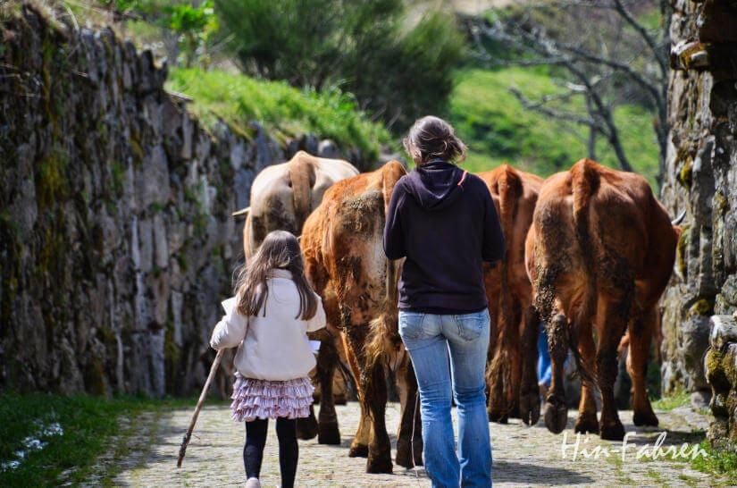Kuh-Hirtinnen in Portugal