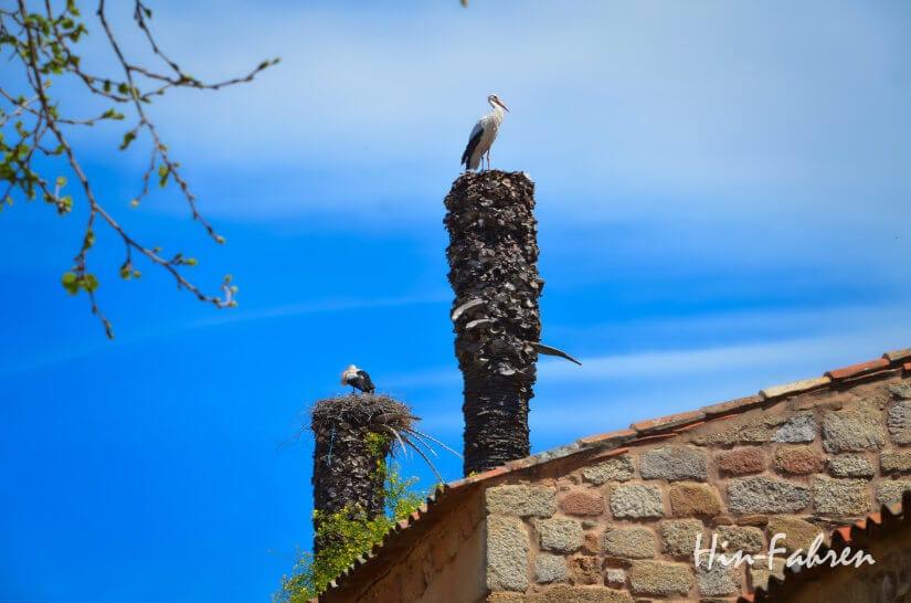 Störche auf einer Palme in Portugal