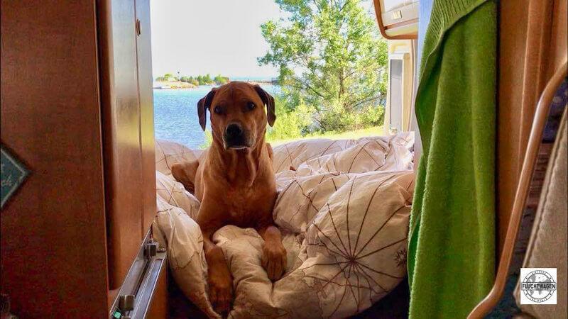 Hund im Bett im Karmann Wohnmobil