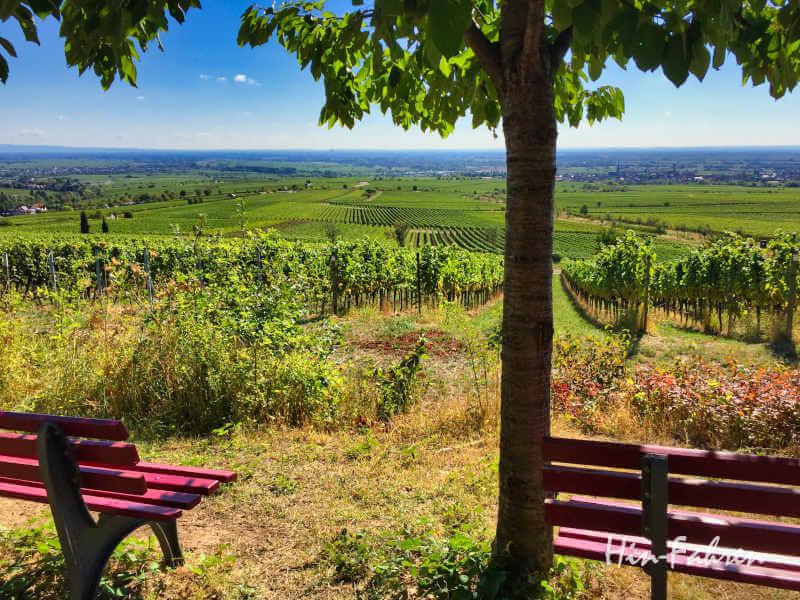 Blick auf die Pfalz und die Weinberge