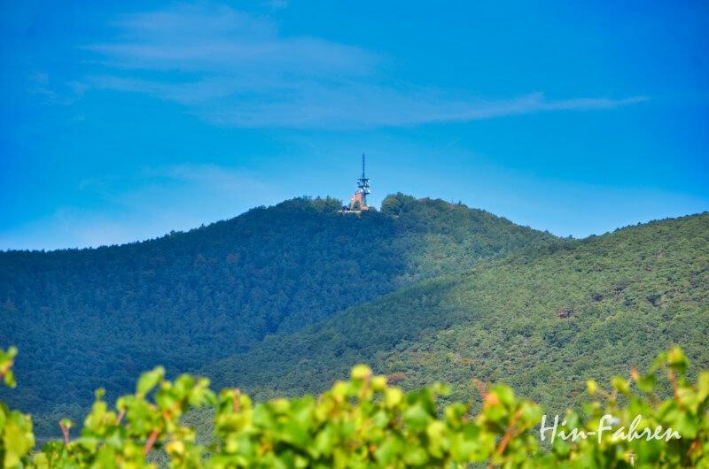 Die Kalmit in der Pfalz
