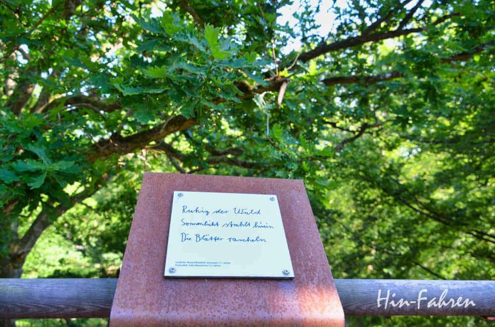 Baumkronen vom Baumwipfelpfad Ivenack Mecklenburgische Seenplatte